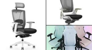 Secretlab Titan vs Ergochair | Office Gaming Chair showdown